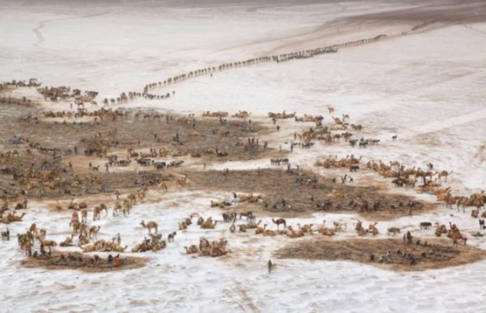 Podsećajući na prizor iz biblijskih vremena, karavani stižu u rudnike soli jezera Asele, 116 metara ispod nivoa mora. Blokovi soli, zvani amole, korišćeni su vekovima širom Etiopije kao platežno sredstvo.