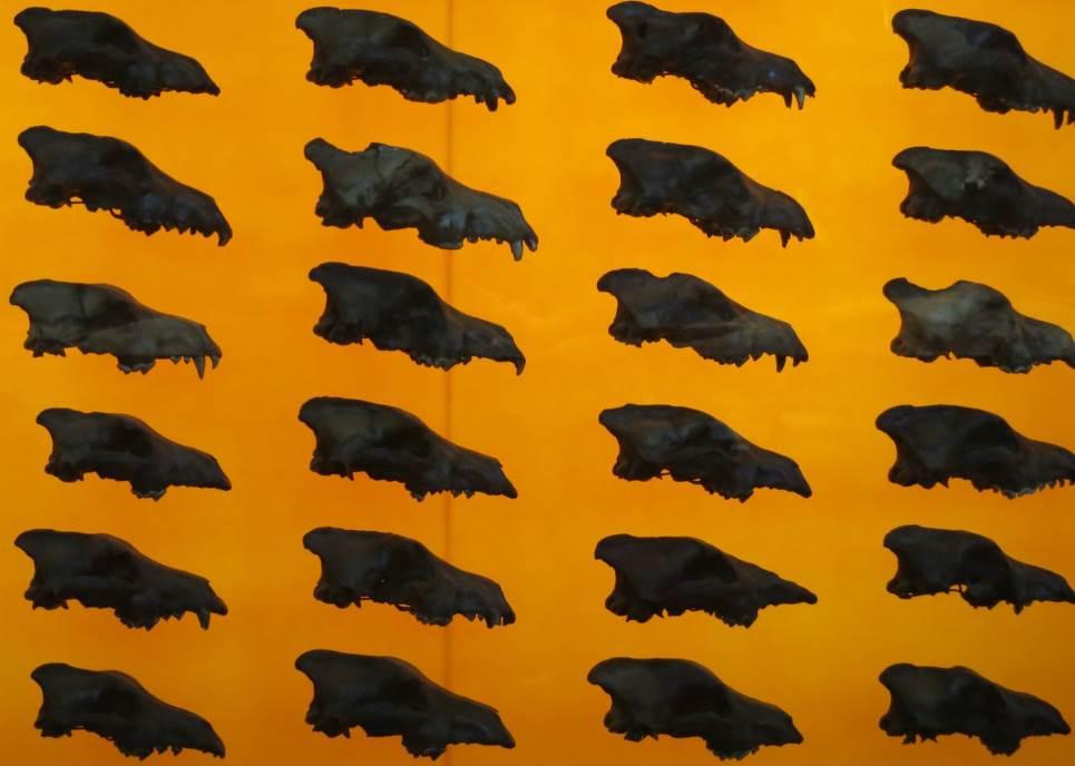 Lobanje strašnih vukova