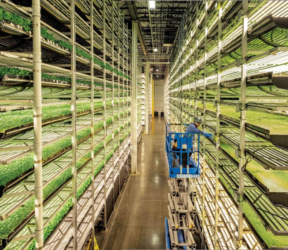 Najvećom unutrašnjom vertikalnom farmom na svetu rukovodi Aerofarms u svom sedištu u Njuarku, u Nju Džersiju. Cilj je da se gaji povrće preko cele godine u srcu gradova. Mlado lisnato povrće gaji se na višekratno upotrebljivom supstratu napravljenom od recikliranih plastičnih boca. Vlaga se propušta do korenja odozdo, čime se uštedi i do 95 odsto vode koja bi bila potrebna napolju. Ne koriste se nikakvi pesticidi. Hranljivi sastojci i đubriva dodaju se samo kad su potrebni. A osvetljenje obezbeđuje određenu talasnu dužinu koja je povrću potrebna. U kompaniji kažu da im je prinos 390 puta veći od onih na njivama.