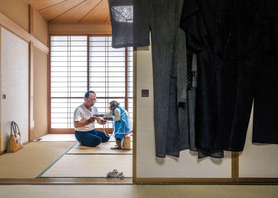 Kaoru Amagaj živi u tradicionalnoj japanskoj kući u Oti, u Gunmi, s tri kućna ljubimca makakija. Kaže da se prema majmunima odnosi kao što bi i prema deci, odeva ih (ima stotinu komada odeće), kupa ih i svakodnevno hrani zakuskama na bazi jogurta. Takođe kaže da je lanac spreda tu da majmunima ne bi spadale pelene.