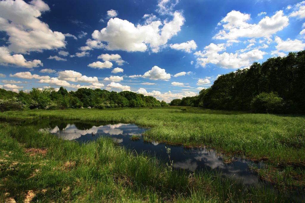 Vlažna područja u okviru Specijalnog rezervata prirode Gornje Podunavlje u Srbiji