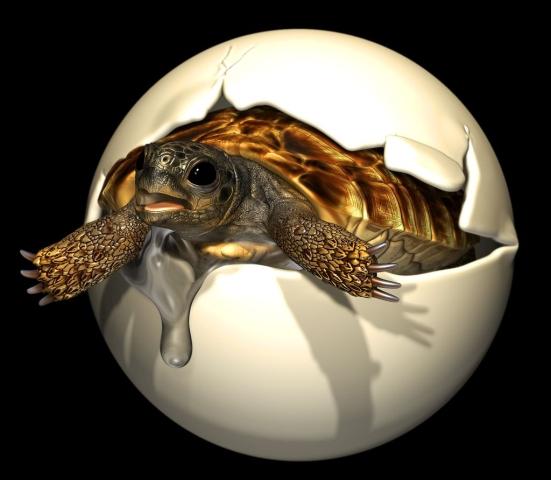 fosil-jaje-embrion-kornjaca-0627508861 (2)