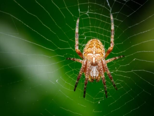 kako-ubijaju-pauci-mravi_1458632165