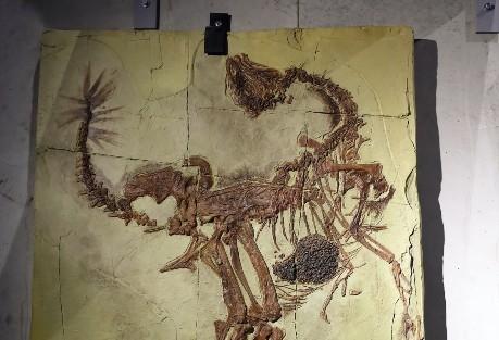 dnk-dinosaurus_1715479525