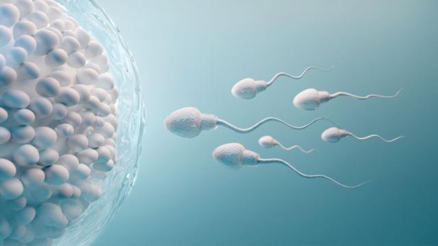 jajne-celije-i-spermatozoidi_1385193920